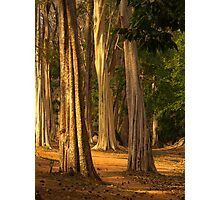 Forest near Siem Reap, Cambodia Photographic Print