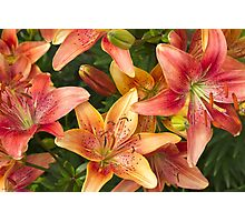 Lilies In Orange Red And Yellow  Photographic Print