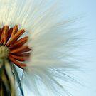 Dandelion's Wig by Squealia