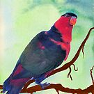 Black-capped Lory by Margaret Stevens
