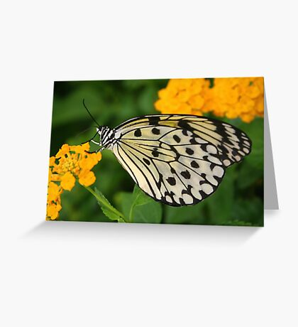 Paper Kite Butterfly with Folded Wings on Yellow Lantana Greeting Card