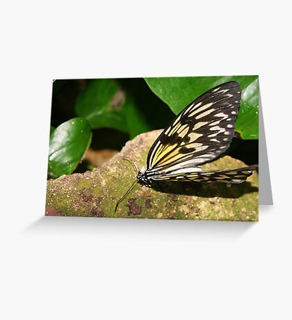Paper Kite Butterfly with Open Wings Greeting Card