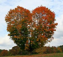 A Tree With Heart by kristieb