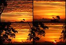 """""""Sunrise Collage"""" by debsphotos"""