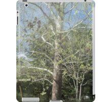 Old Maple Tree iPad Case/Skin