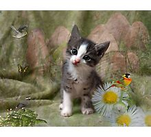 A Kittens Dream Photographic Print