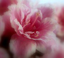 Soft pink by i l d i    l a z a r