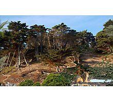 1163-Alone in the Jungle Photographic Print