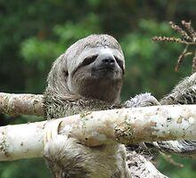 3 Toed Sloth by Brigid Mary Prain