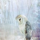 Ghost Owl by Lynn Starner