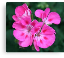 Showy Blossoms Canvas Print