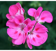 Showy Blossoms Photographic Print