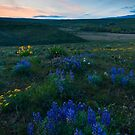 Cowiche Wildflower Sunset by DawsonImages
