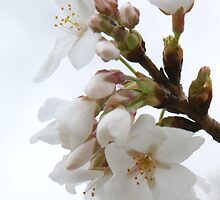 spring delicates by Alexandr Grichenko