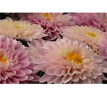 Mothers Day Flowers - Chrysanthemum's Photographic Print