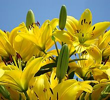 Yellow Lilies Sky High by SummerJade