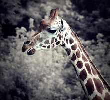 GIRAFFE by PIMPINELLA-ART