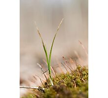 grass in moss Photographic Print
