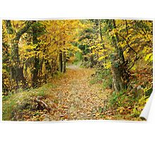 Autumn light in the forest Poster
