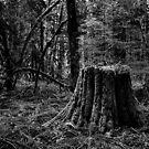 Life on a Dead Stump by Jenny Ryan