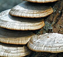 Tree Fungus by joan warburton