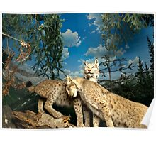 Natural environment diorama - two leopards  Poster