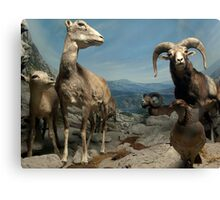 Natural environment diorama - steinbocks Canvas Print