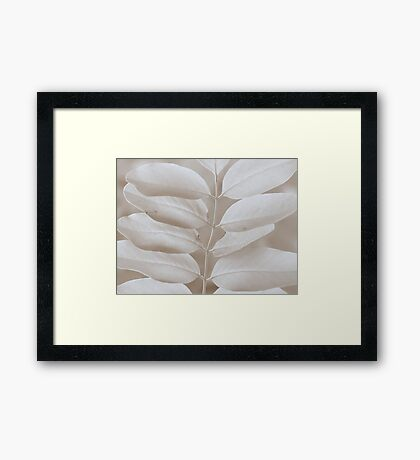 Robinia  Framed Print