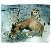 Natural environment diorama -  A deer escaping a tiger attack  Poster
