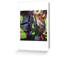 Donkeys  Greeting Card
