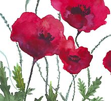 Poppies by sinellia