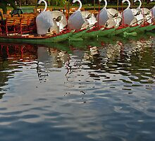 Swan Boats 2 by vgbg