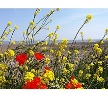 flowers at the beach Photographic Print