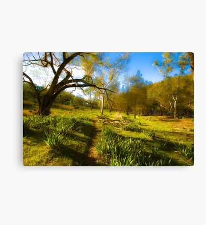 Australian Bush Canvas Print