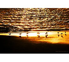 Golden Hues Photographic Print