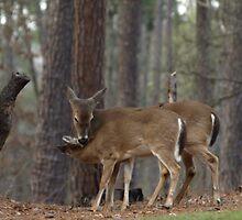 Deer Me, It's Bath Time by Linda Mathews