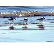 C'mon Everybody, Do the Sand Piper Strut! Photographic Print