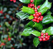 Holly Leaf and Berries by Jeffery  Bull