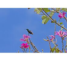 Humming Bird in St Lucia Photographic Print