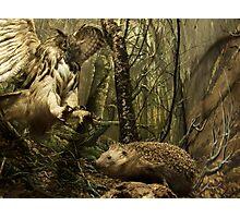 Natural environment diorama - A owl attacking a hedgehog Photographic Print