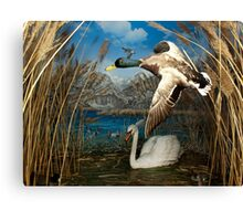 Natural environment diorama - a mallard and a swan in a pond  Canvas Print