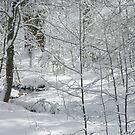 Snowy Trees And Stream by John Ayo