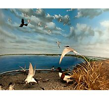 Natural environment diorama - birds flying on the shore of a pond  Photographic Print