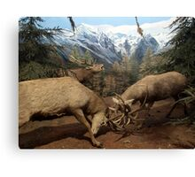 Natural environment diorama - Two deers fighting  Canvas Print