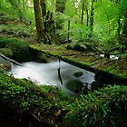 A path less trodden by Donovan wilson