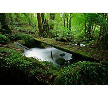 A path less trodden Photographic Print