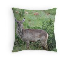 Water Buck Throw Pillow