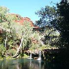 Fern Pool, Karijini National Park, Western Australia by Martyn Baker | Martyn Baker Photography