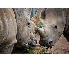 Rhino Photographic Print