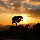 Golden Sun by Dominic Kamp